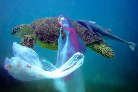 Plastic-Bag-Pollution